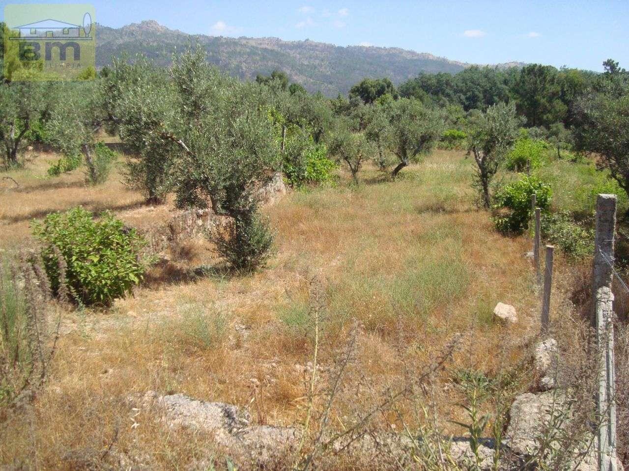 Quintas e herdades para comprar, Almaceda, Castelo Branco - Foto 32