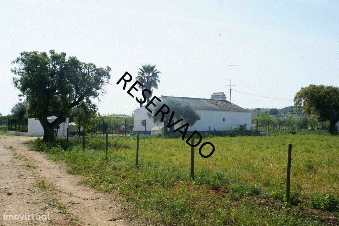 Monte alentejano com Olivais (RESERVADO)