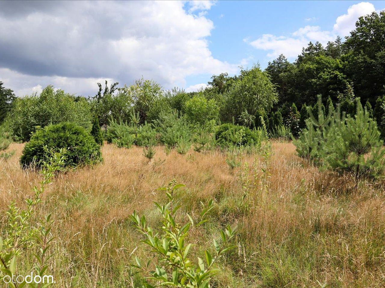 Działka obok Rezerwatu Przyrody Wiączyń