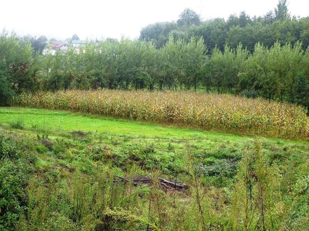 Terreno para comprar, Monsul, Braga - Foto 6