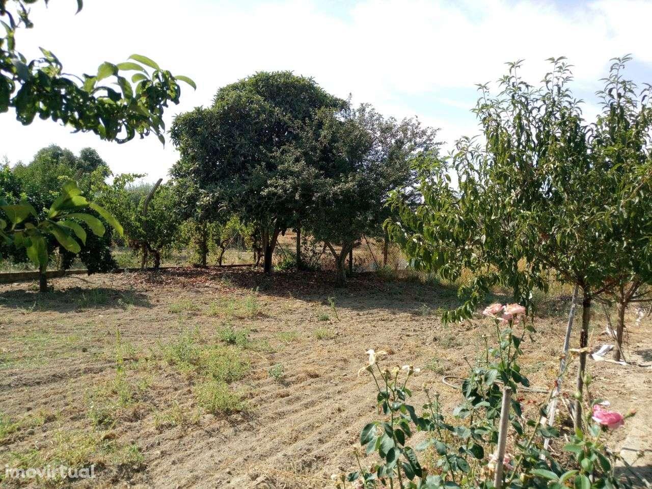 Terreno para comprar, Pego, Abrantes, Santarém - Foto 15