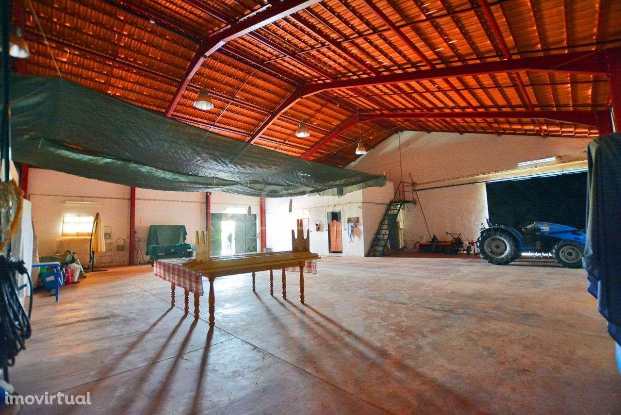 Quintas e herdades para comprar, Branca, Coruche, Santarém - Foto 42