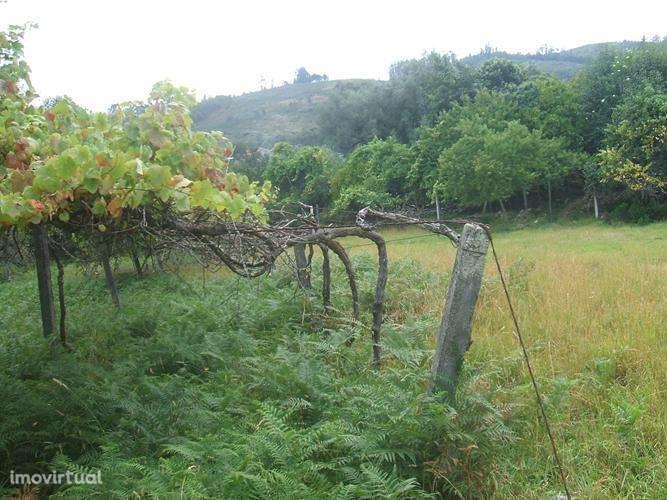 Quintas e herdades para comprar, Facha, Viana do Castelo - Foto 7
