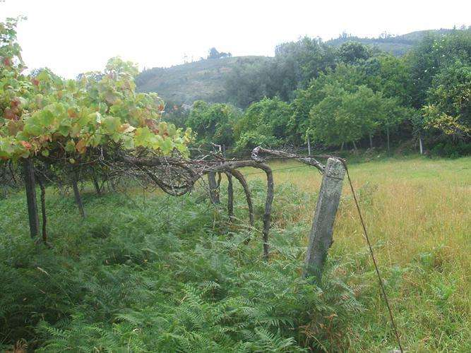 Quintas e herdades para comprar, Facha, Ponte de Lima, Viana do Castelo - Foto 7