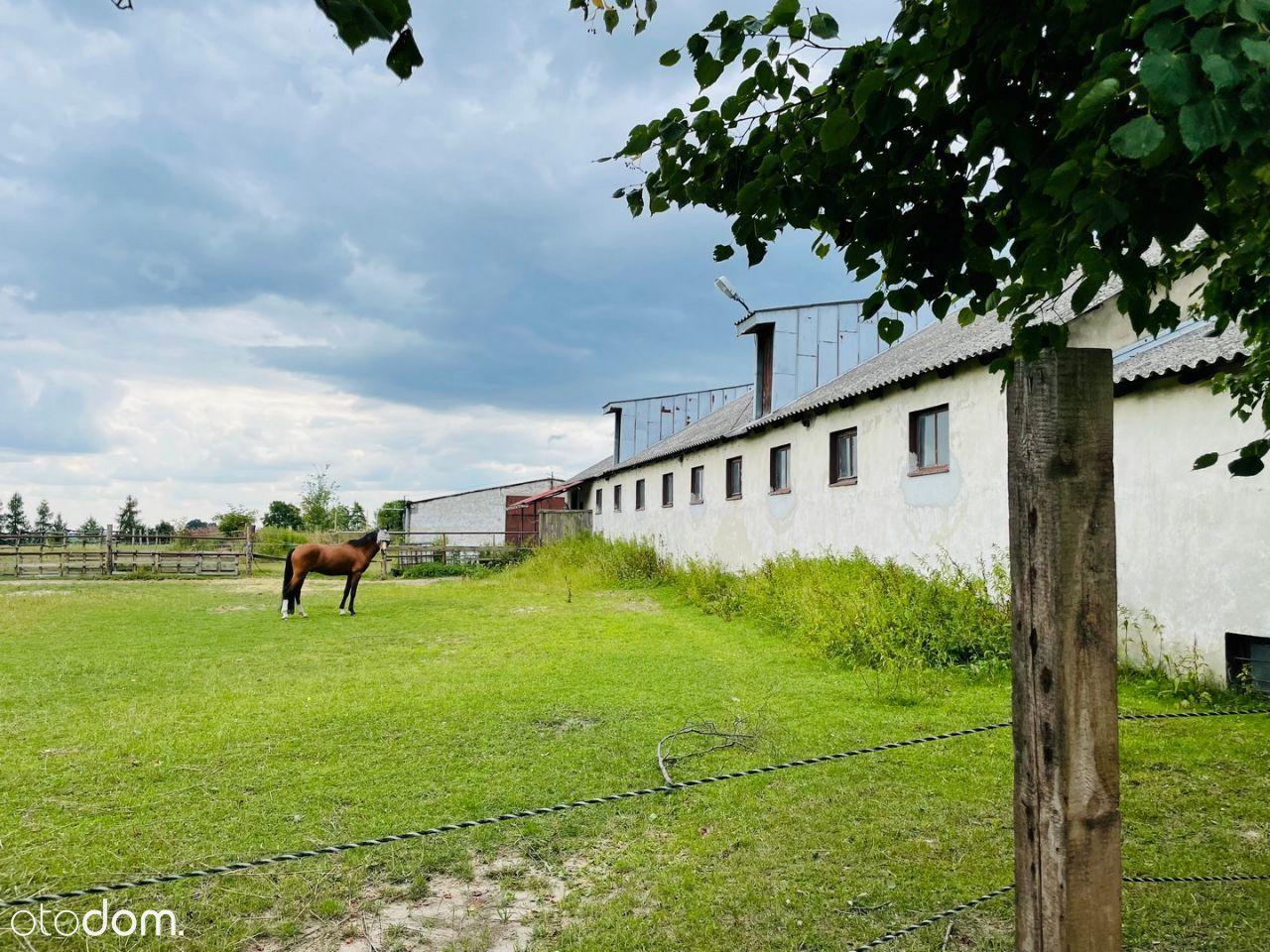 stajnia, budynek mieszkalno-usługowy,1,97ha Łubki