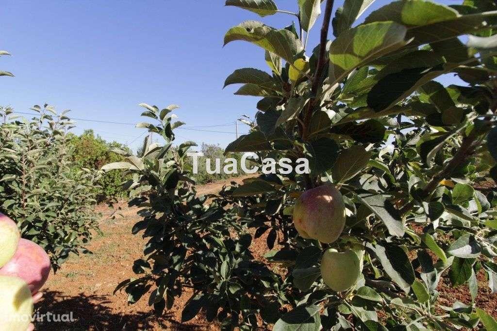 Quintas e herdades para comprar, Moncarapacho e Fuseta, Olhão, Faro - Foto 36