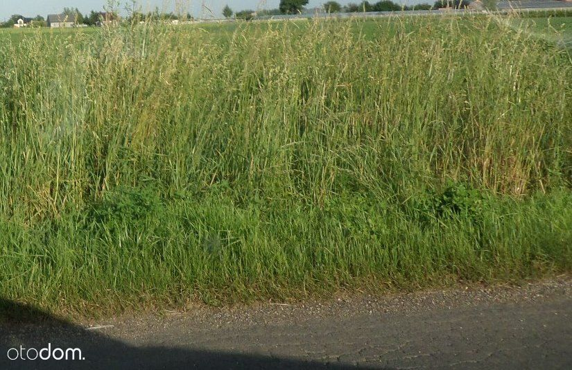 Działka rolna 11800m2 ul. Pszenna.