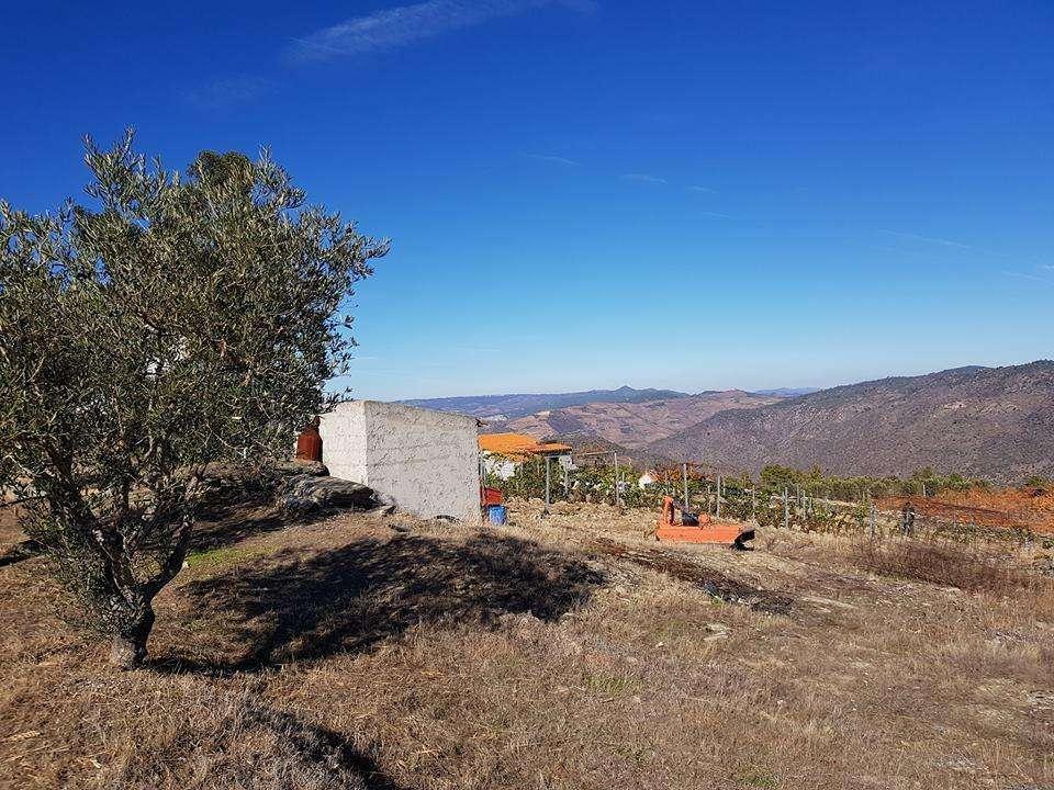 Quintas e herdades para comprar, Ervedosa do Douro, Viseu - Foto 4
