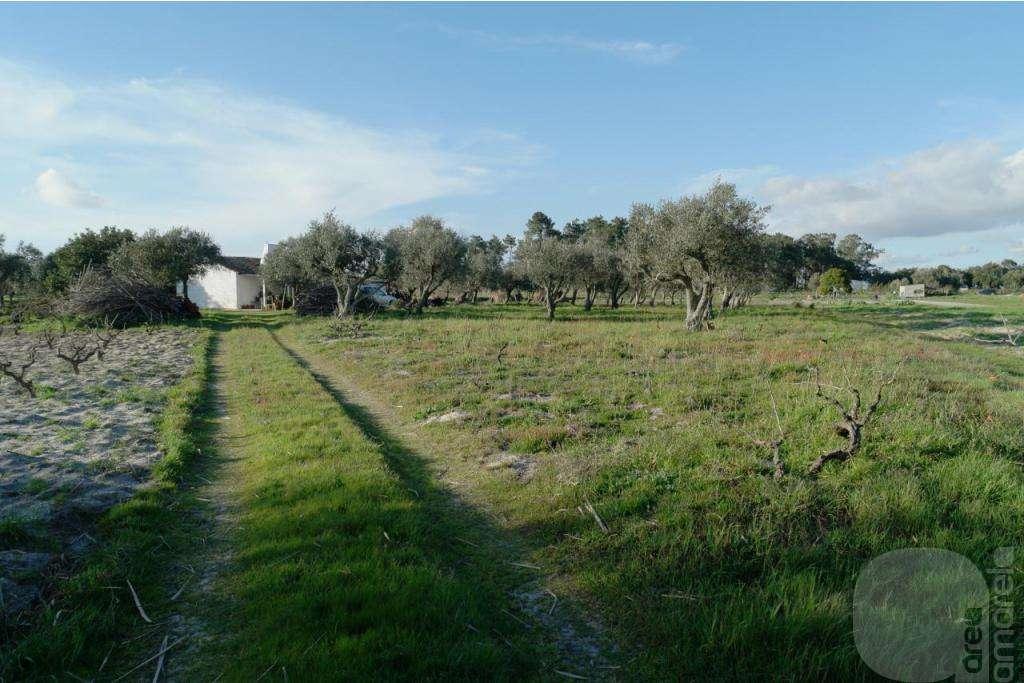 Quintas e herdades para comprar, Grândola e Santa Margarida da Serra, Setúbal - Foto 5