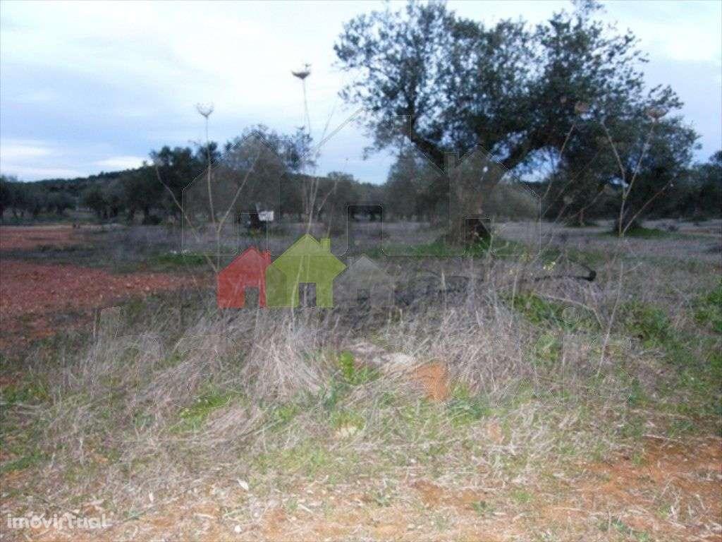 Terreno para comprar, Vila Nova de São Bento e Vale de Vargo, Serpa, Beja - Foto 3