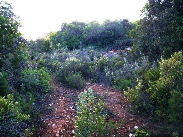 Terreno para comprar, Quelfes, Faro - Foto 7