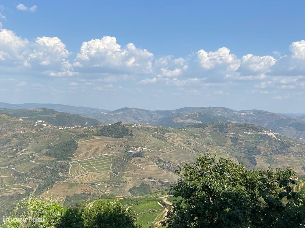 Quinta - Aldeia vinhateira de Provesende