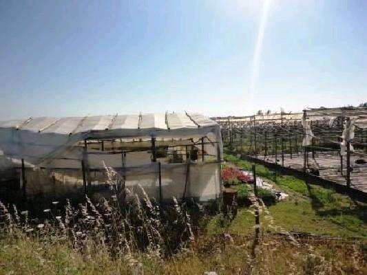 Terreno para comprar, Silves, Faro - Foto 5