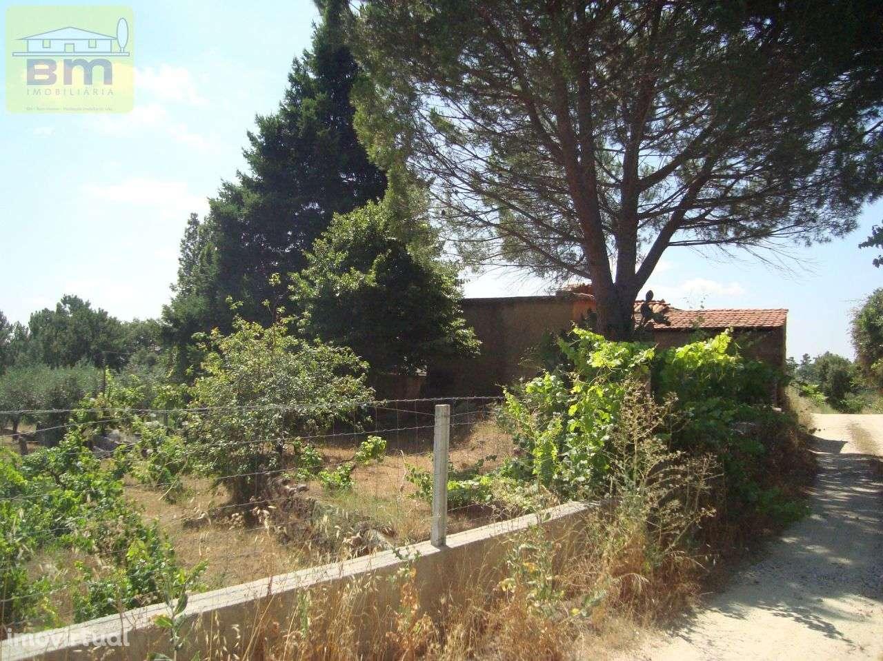 Quintas e herdades para comprar, Almaceda, Castelo Branco - Foto 52