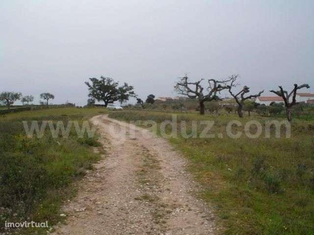 Terreno para comprar, Vila Velha de Ródão, Castelo Branco - Foto 3