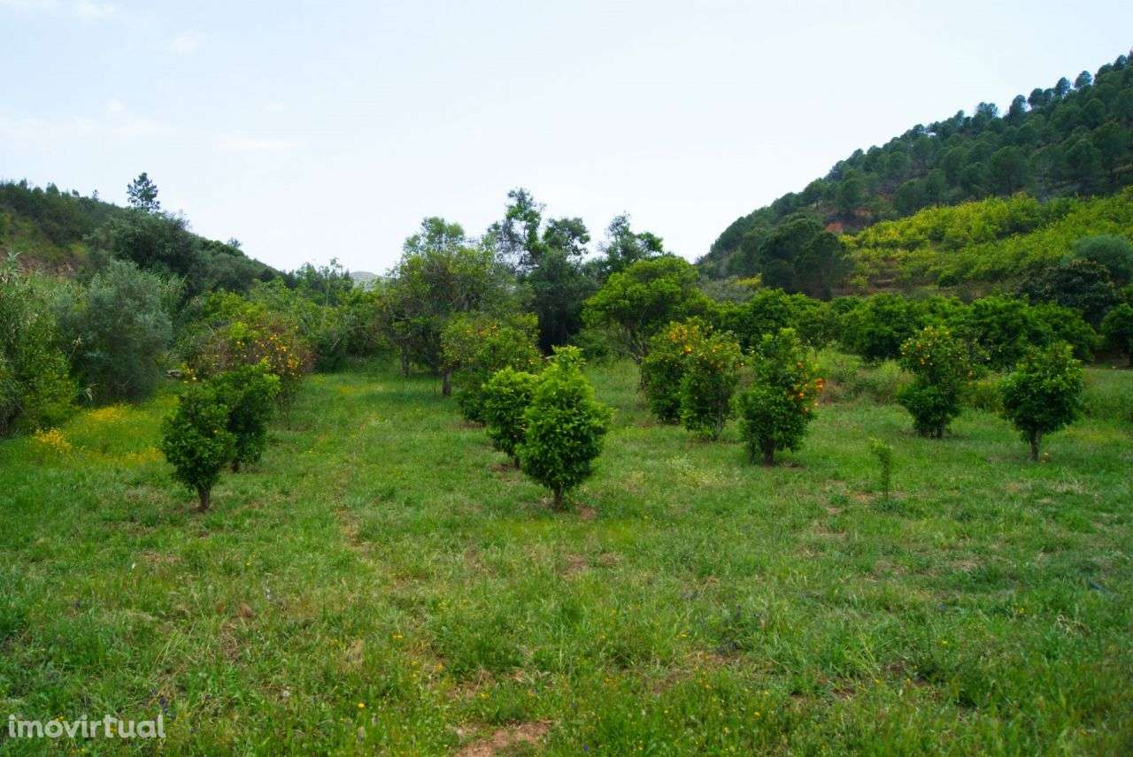 Terreno para comprar, Alferce, Monchique, Faro - Foto 17