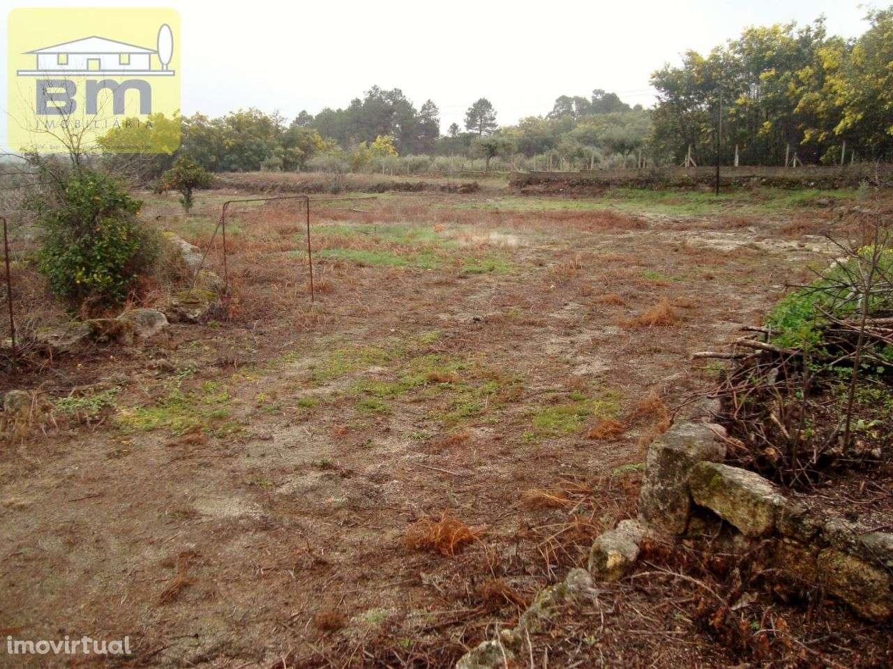Quintas e herdades para comprar, Almaceda, Castelo Branco - Foto 21