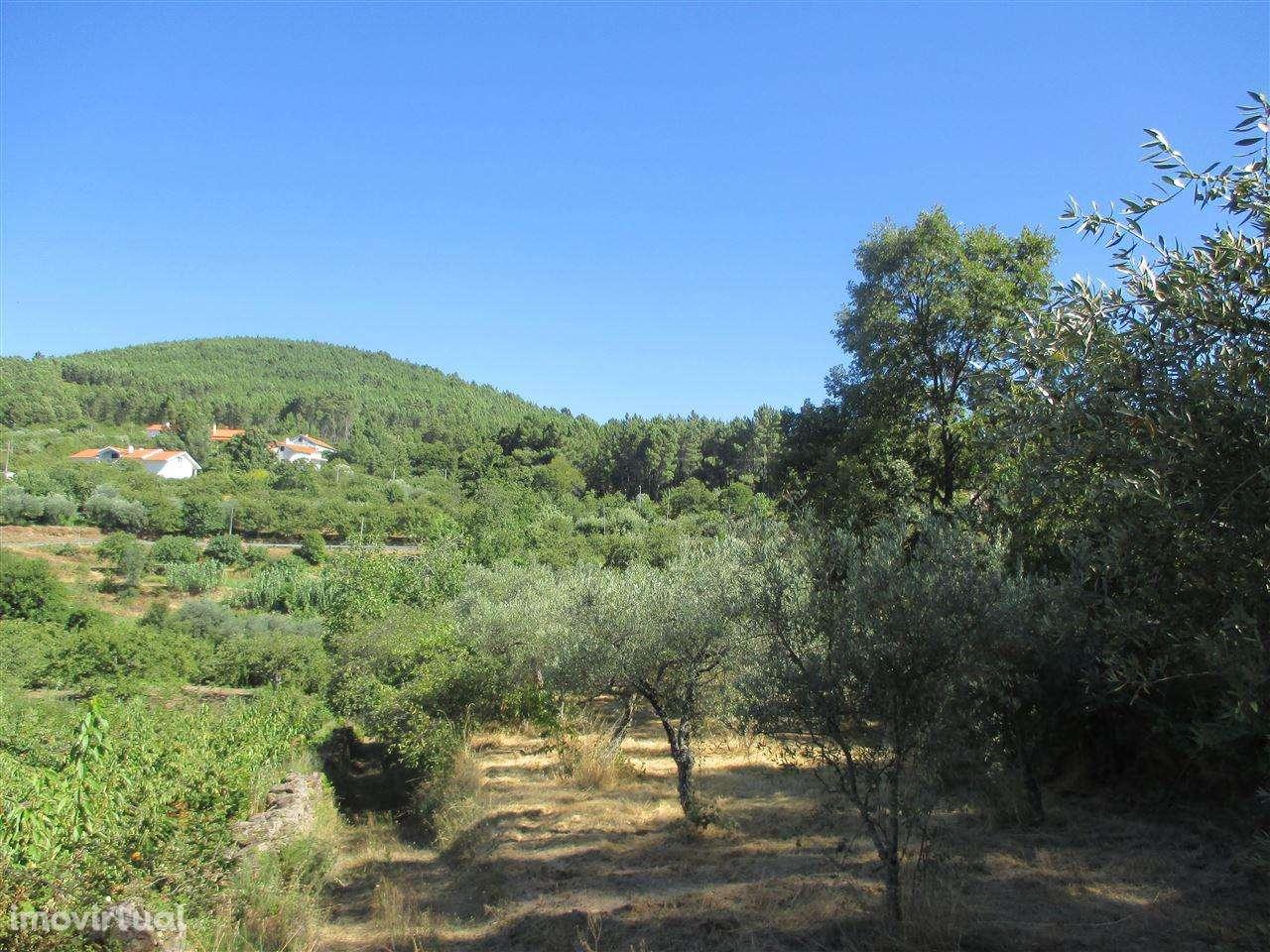 Terreno para comprar, Alcaide, Castelo Branco - Foto 7