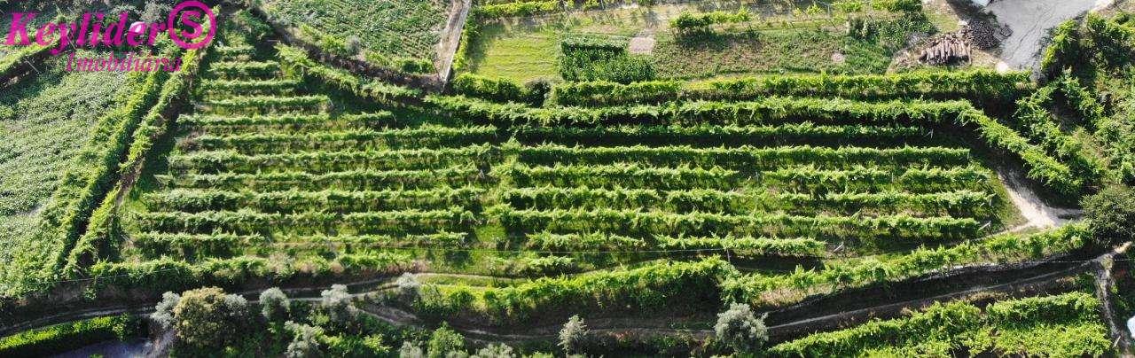 Quintas e herdades para comprar, Gondar, Porto - Foto 4