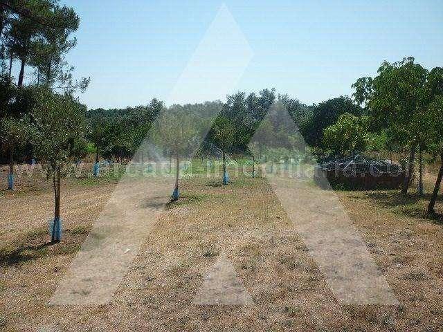 Quintas e herdades para comprar, Sangalhos, Anadia, Aveiro - Foto 15