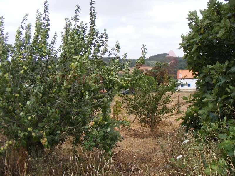 Quintas e herdades para comprar, Lourinhã e Atalaia, Lourinhã, Lisboa - Foto 17