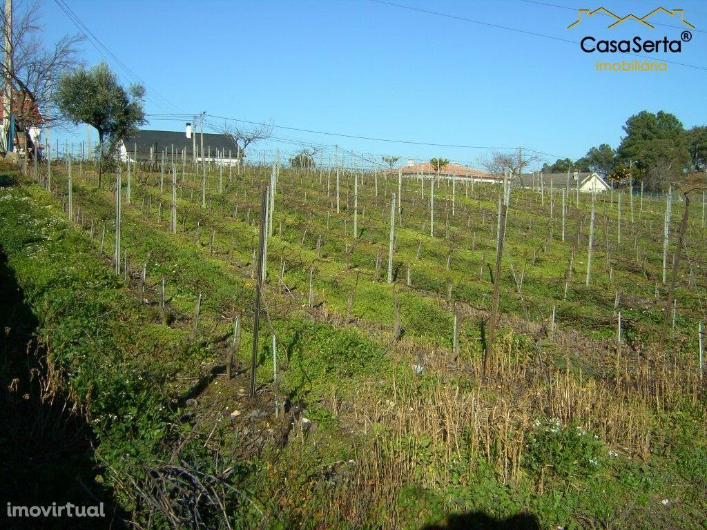 Terreno para comprar, Carvalhal, Sertã, Castelo Branco - Foto 2