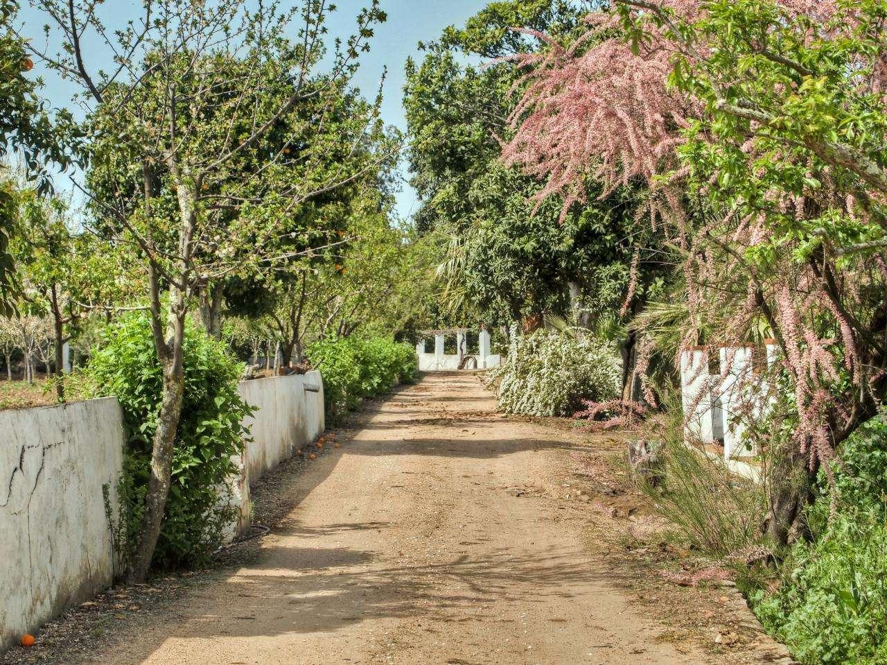 Quintas e herdades para comprar, São Brás e São Lourenço, Elvas, Portalegre - Foto 4