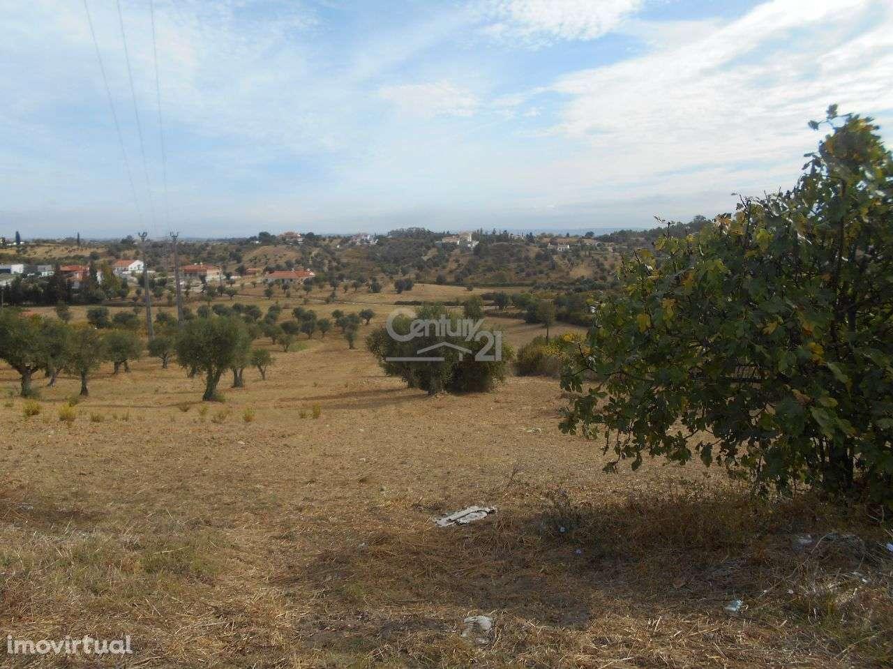 Terreno para comprar, Brogueira, Parceiros de Igreja e Alcorochel, Torres Novas, Santarém - Foto 1