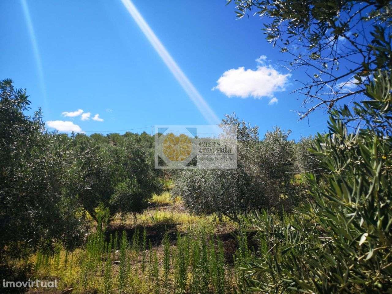Quintas e herdades para comprar, Seixo de Manhoses, Vila Flor, Bragança - Foto 16