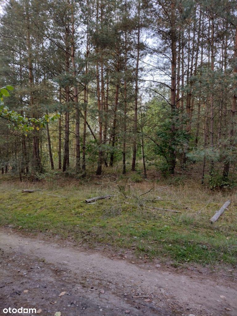 Działka budowlana przy lesie
