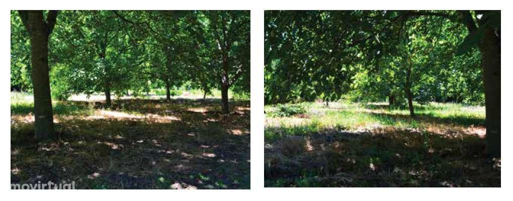 Quintas e herdades para comprar, Lemenhe, Mouquim e Jesufrei, Braga - Foto 21