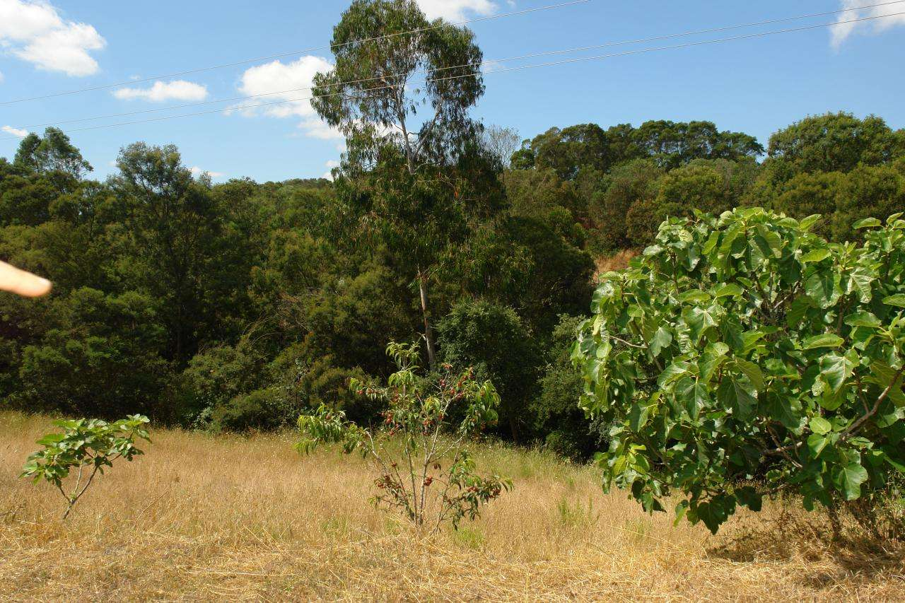 Quintas e herdades para comprar, São Teotónio, Beja - Foto 28