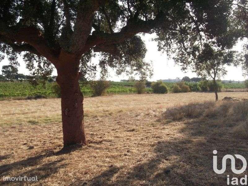 Terreno para comprar, Fronteira - Foto 14