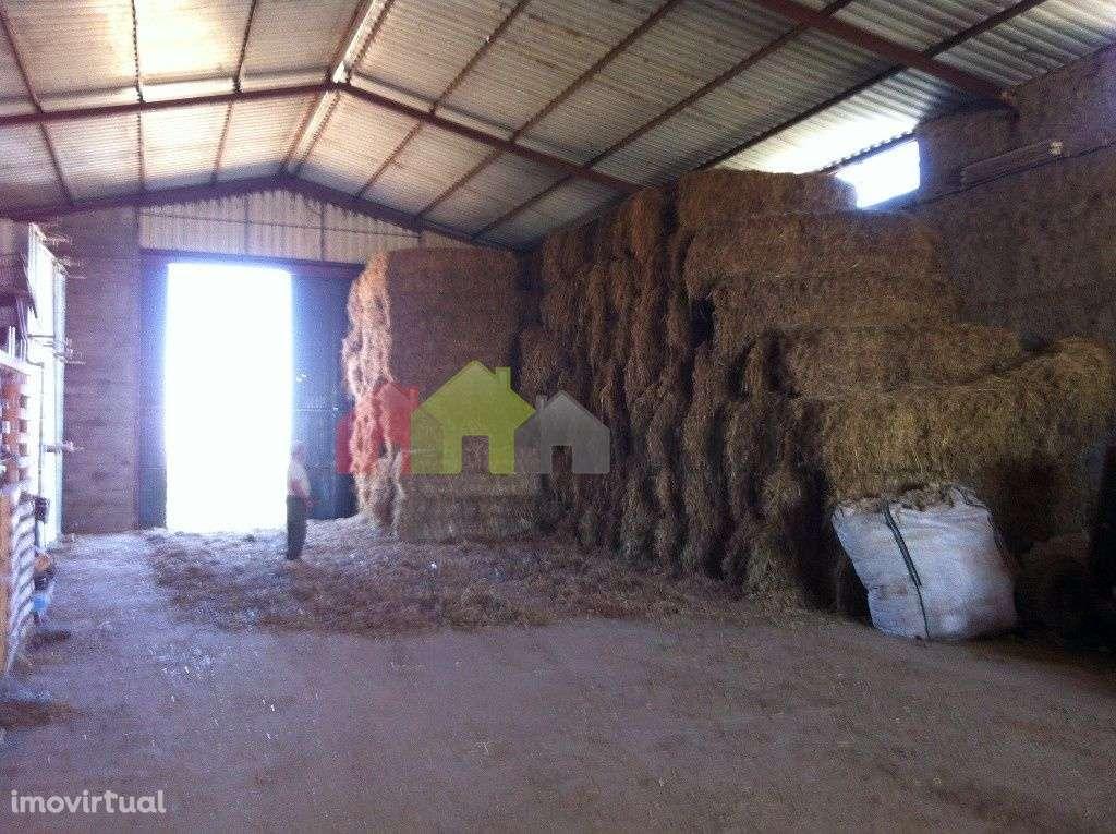 Quintas e herdades para comprar, Aljustrel e Rio de Moinhos, Aljustrel, Beja - Foto 23