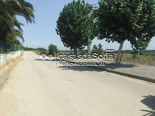 Terreno para comprar, Brogueira, Parceiros de Igreja e Alcorochel, Santarém - Foto 1