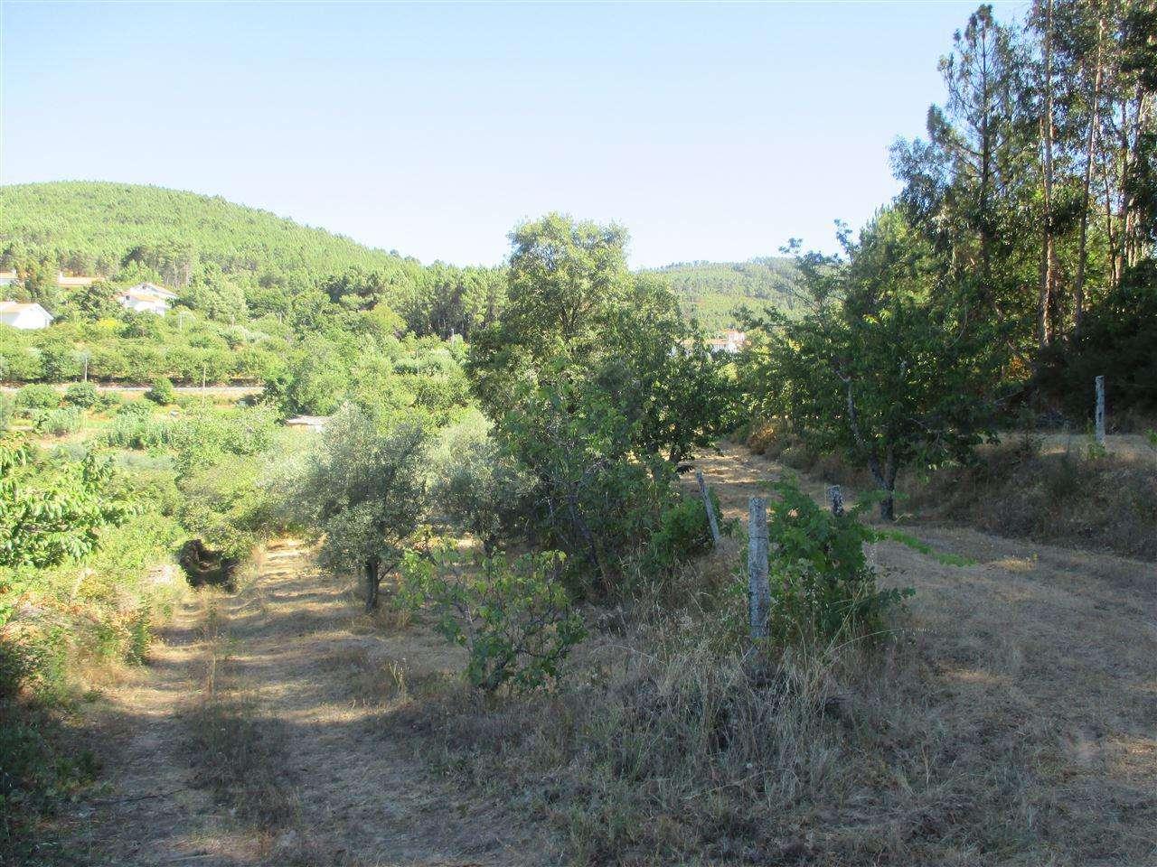 Terreno para comprar, Alcaide, Castelo Branco - Foto 4