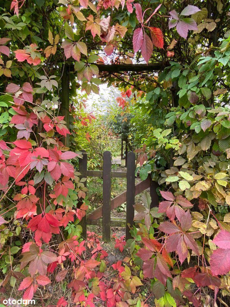 Tajemniczy ogród w Strzelcach Opolskich