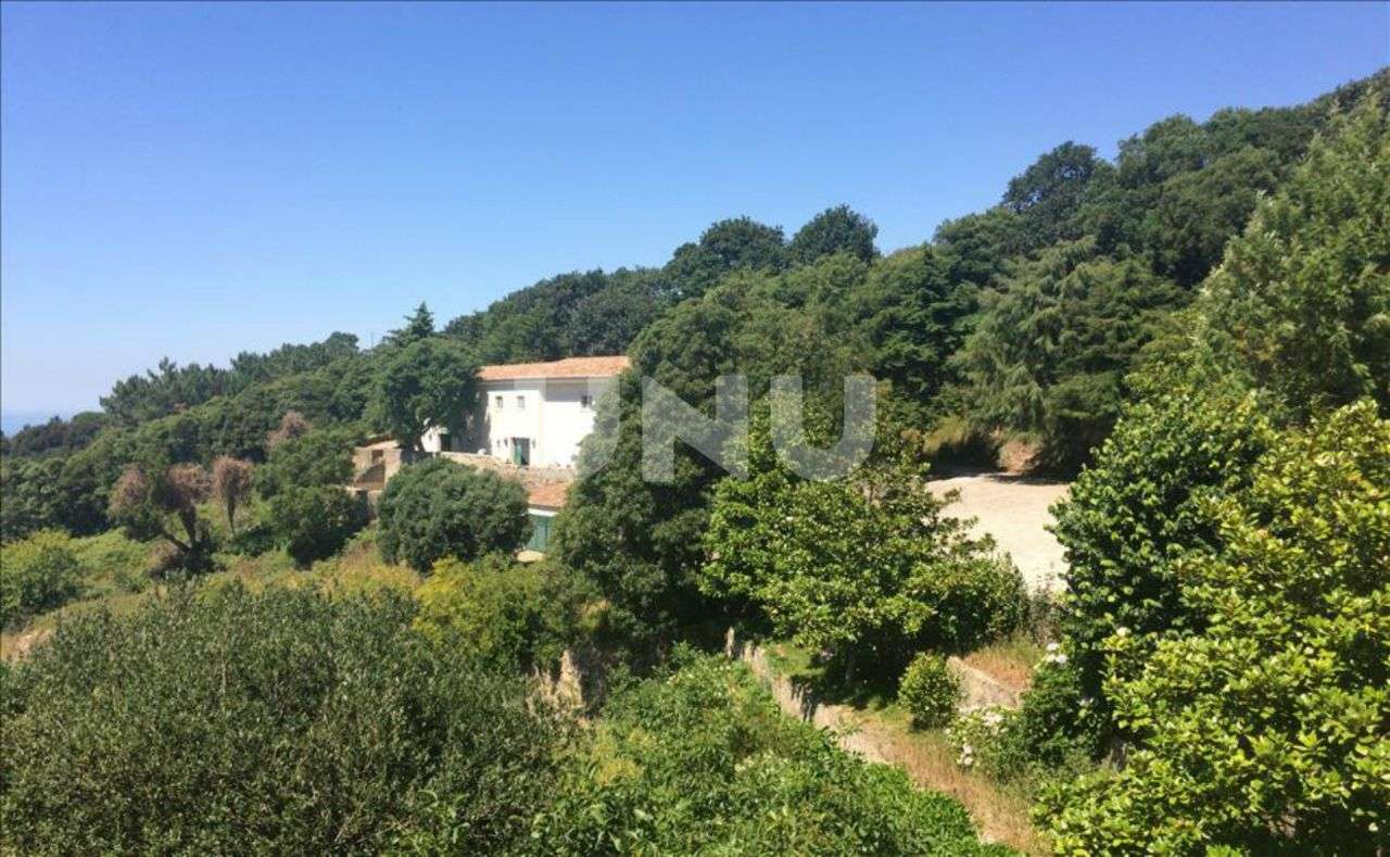 Quintas e herdades para comprar, Colares, Lisboa - Foto 10