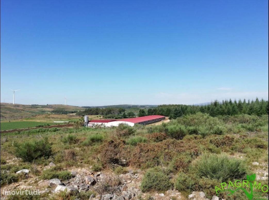 Arrendamento de exploração agropecuária