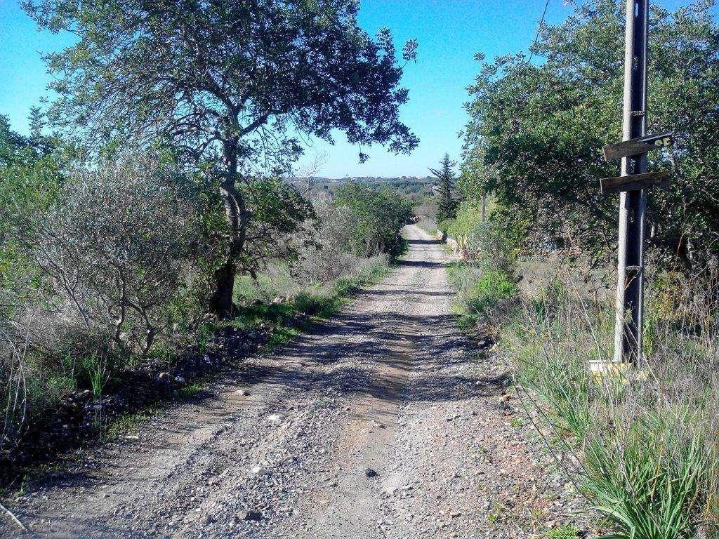 Terreno para comprar, São Bartolomeu de Messines, Silves, Faro - Foto 3