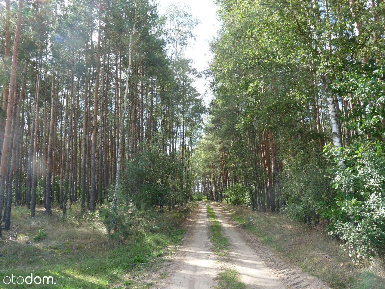 Grunty leśne 2,68 ha