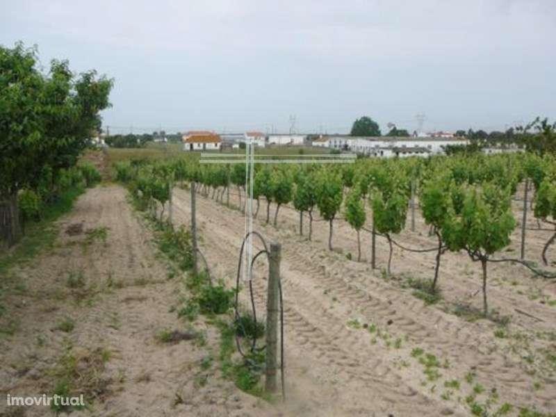 Quintas e herdades para comprar, Pinhal Novo, Setúbal - Foto 33