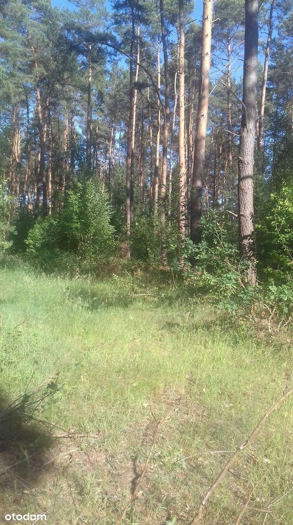 Działka leśna - Santocko