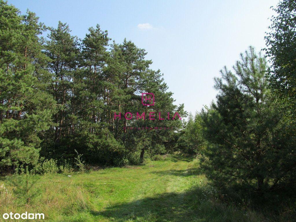 Inwestycyjna działka leśna 16,85 ha