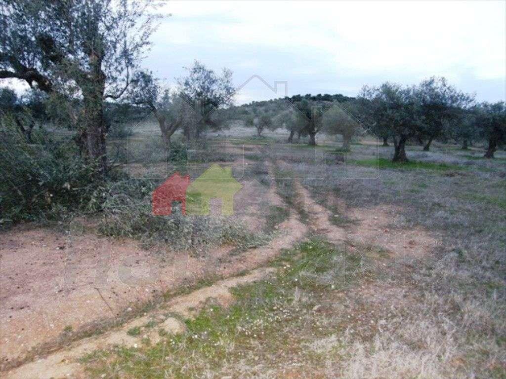Terreno para comprar, Vila Nova de São Bento e Vale de Vargo, Serpa, Beja - Foto 8
