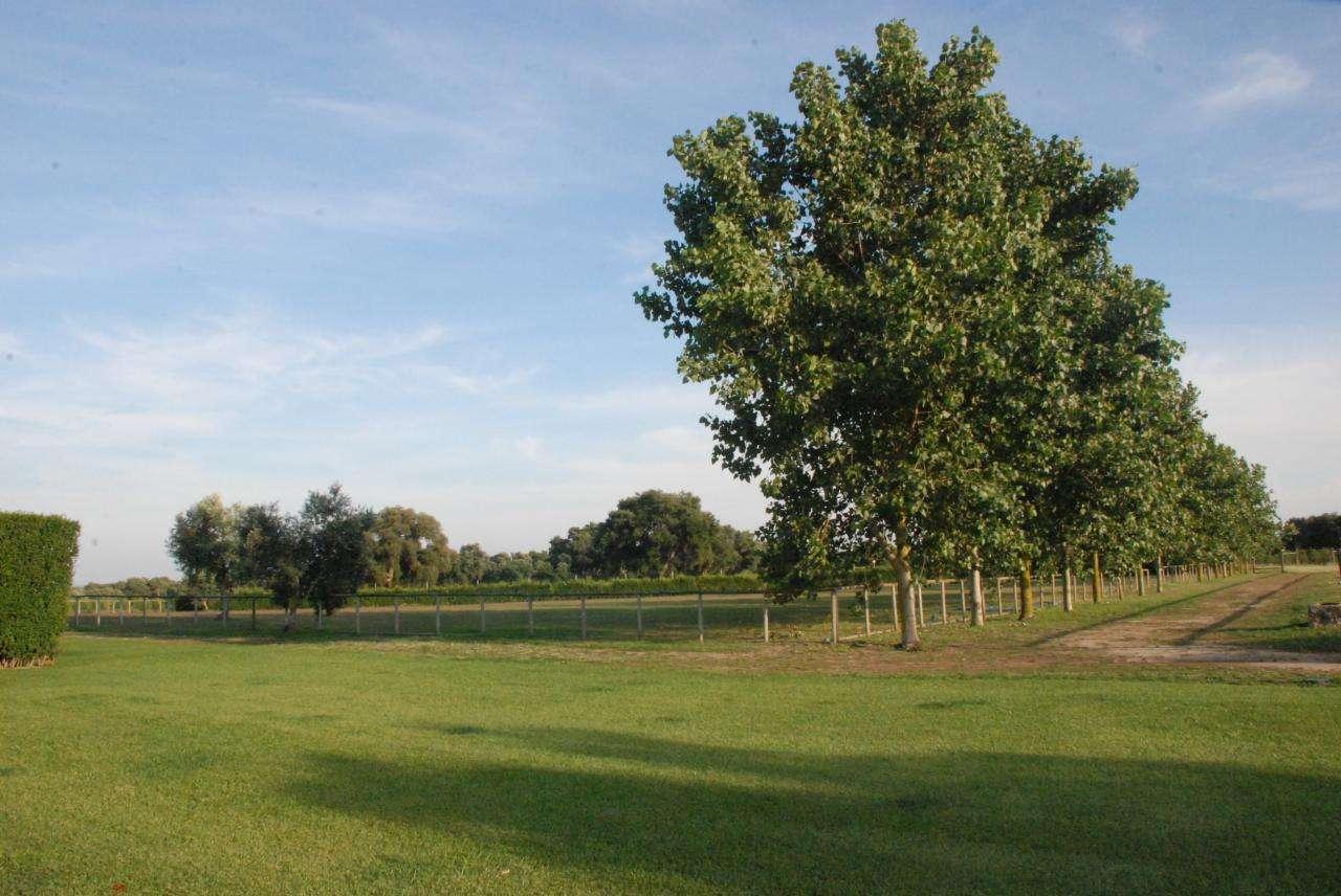 Quintas e herdades para comprar, Vila Chã de Ourique, Santarém - Foto 2