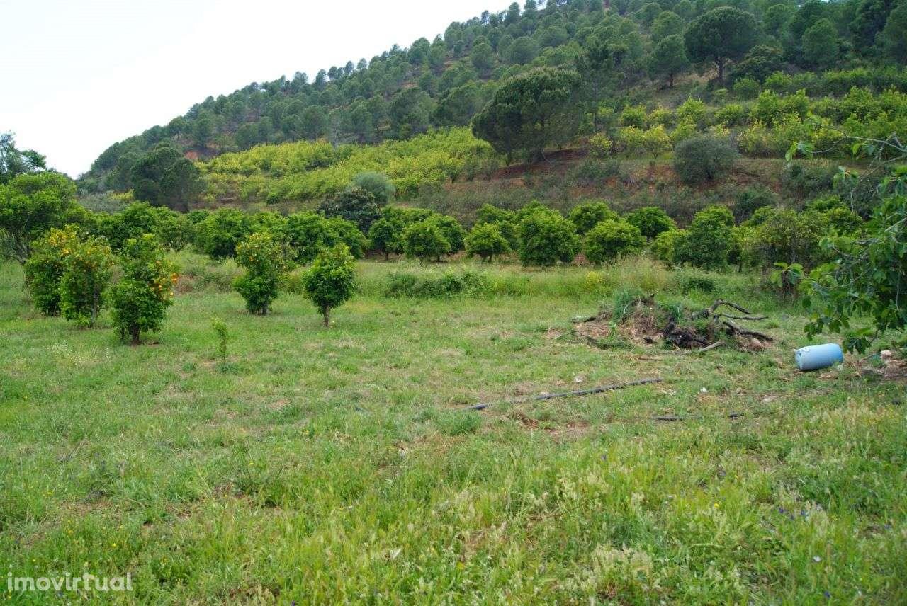 Terreno para comprar, Alferce, Monchique, Faro - Foto 10