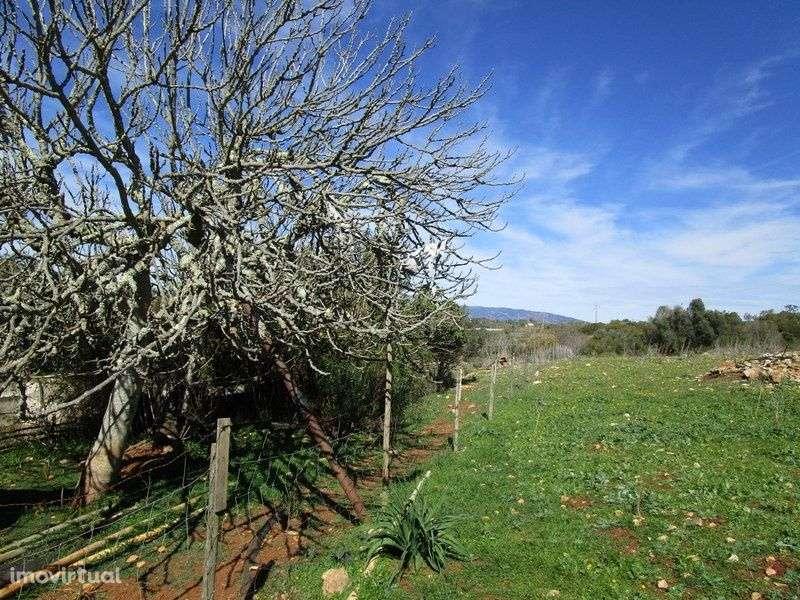 Quintas e herdades para comprar, Mexilhoeira Grande, Portimão, Faro - Foto 6