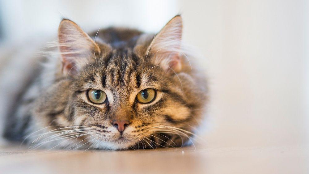 Pet Sitting - Cat Sitting