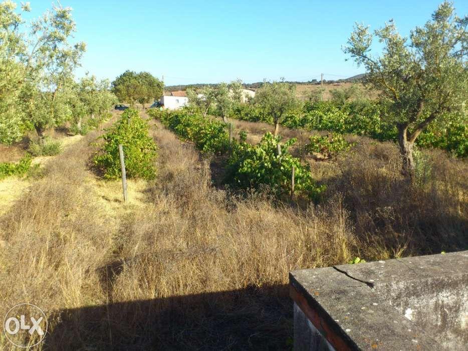 Quinta com luz, 1 hectare com 900 pés de vinha e 80 oliveiras
